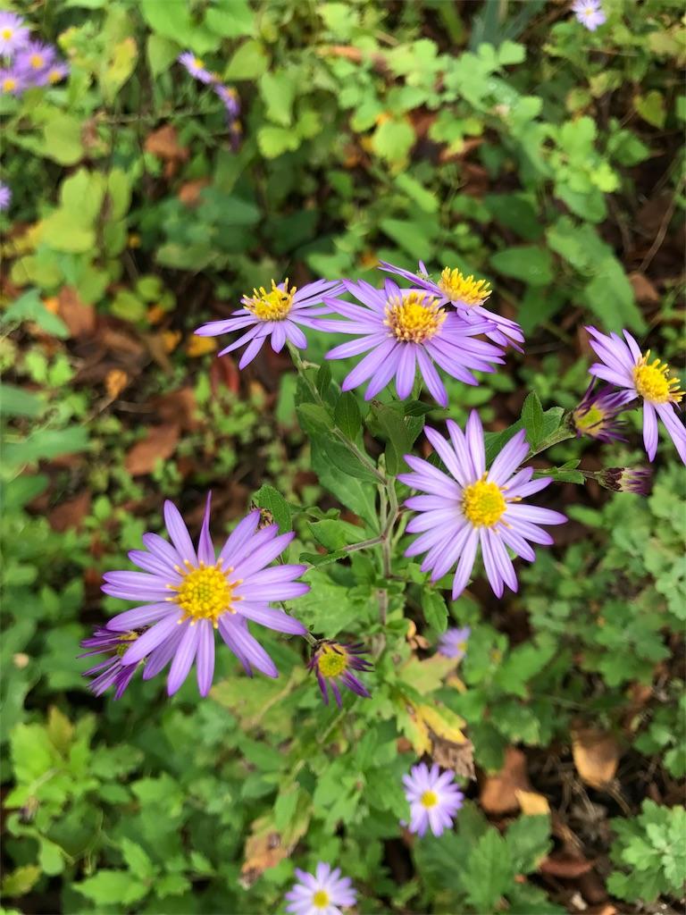 しばらく見ないうちにすっかり咲いてた秋の花を撮って