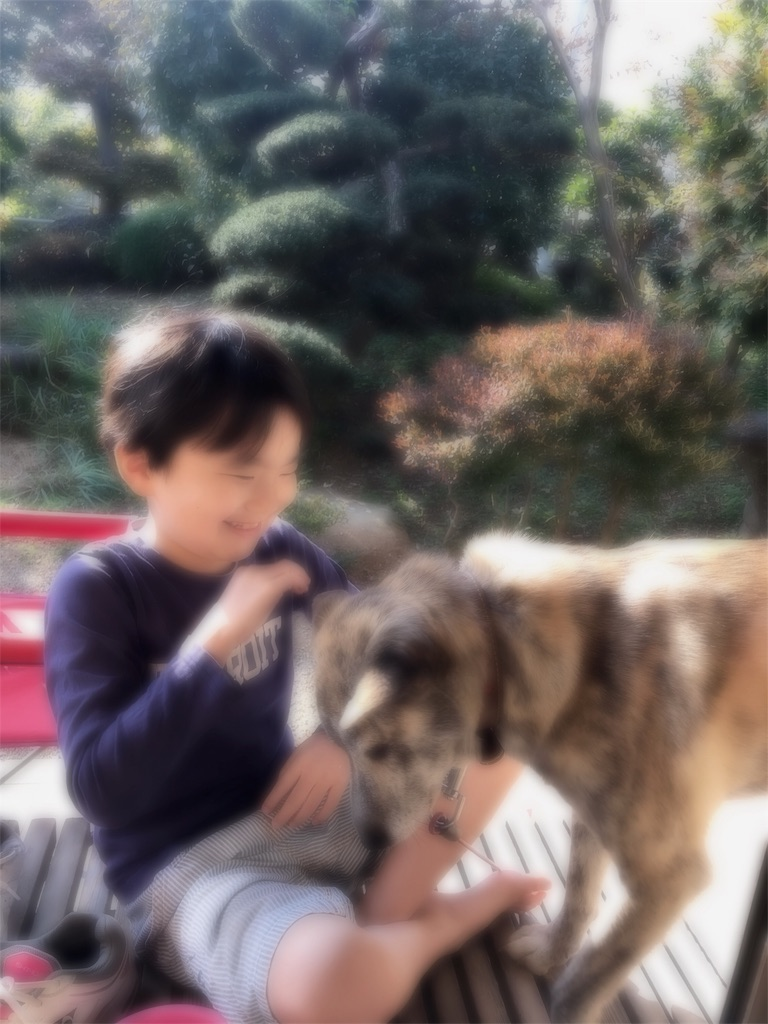 f:id:yutiko:20181119164509j:image