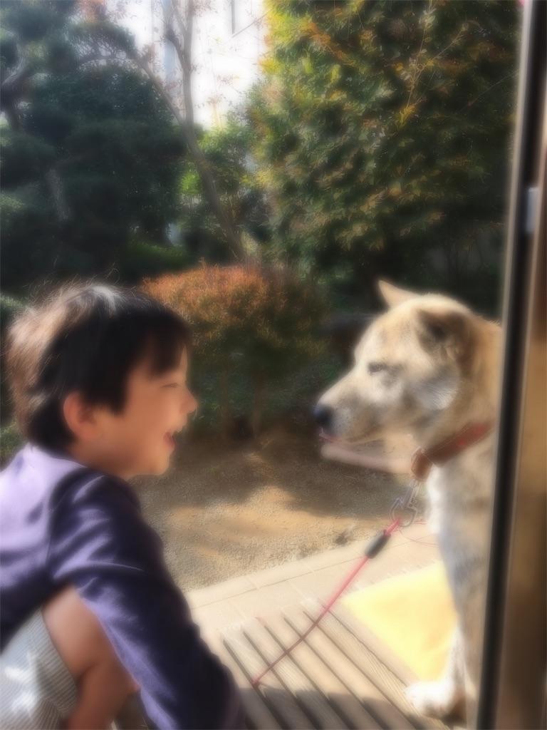 f:id:yutiko:20181119165040j:image